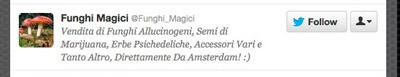 """""""Funghi Magici"""""""